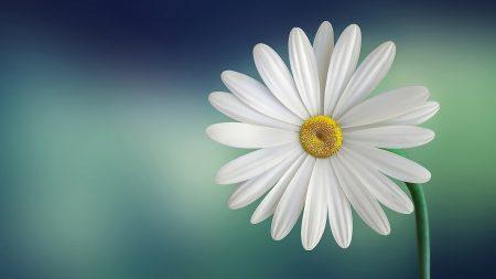 2 fleurs idéales pour décorer son salon : bien-être et décoration